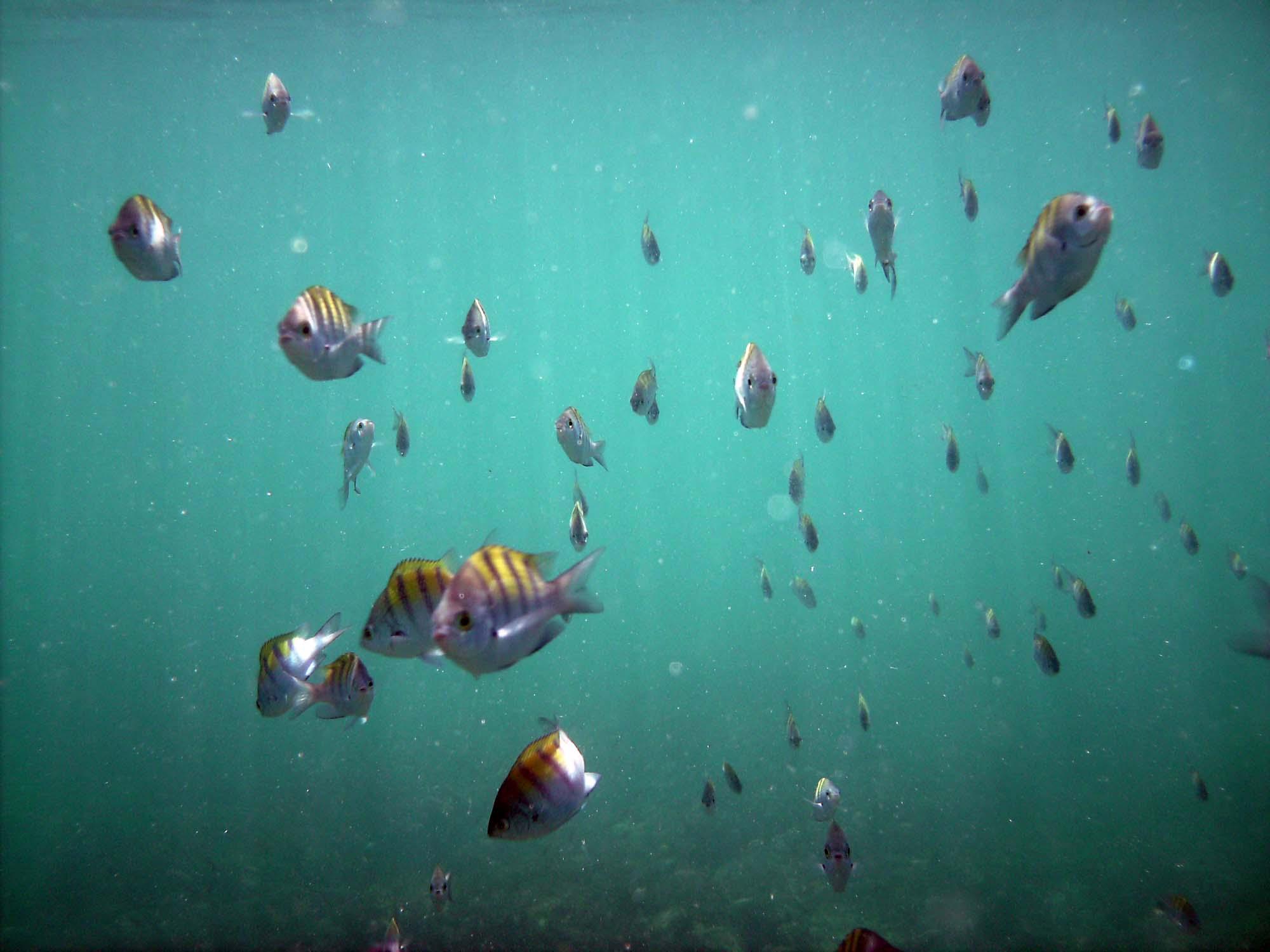 Diving San Carlos | Scuba diving San Carlos Mexico | Sea ...