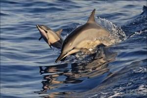 dolphins san carlos mexico