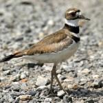 Birding with Dave: April 21