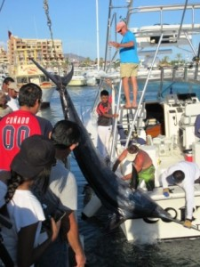 International Billfish Tournament huge fish