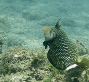 Wrasse mexico Diving Report