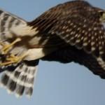 Birding Report: November 24