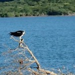 Birding Report: Nov. 5