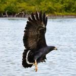 Birding Report: November 18