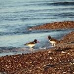 Birding Report: November 11