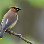 Birding Report: December 29