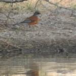 Birding Report: December 23