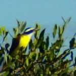 Birding Report: December 2