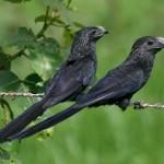 Birding Report: December 9