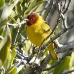 Birding Report: January 19