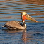 Birding Report: January 26