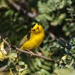Birding Report: January 6