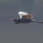 Birding Report: Feb 9