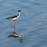 Birding Report: March 2