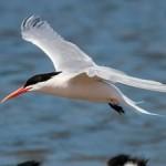 Birding Report: March 15