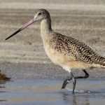 Birding Report: March 29