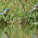 Birding Report: April 4