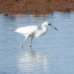 Birding Report: April 26