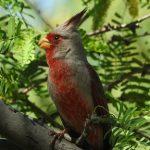 Birding Report: April 20
