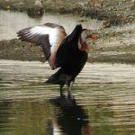 Birding Report: May 24