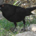 Birding Report: may 3