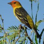 Birding Report: May 10