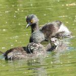 Birding Report: may 17