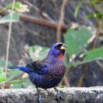 Birding Report: May 31