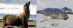 sealion and seal