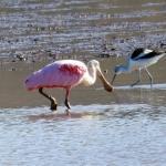 Birding Report: Feb 17