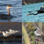 Birding Report: April 29